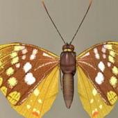 Butterfly Free 3D Model
