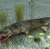 Crocodile Free 3d Model