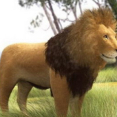 African Lion Free 3dmax Model