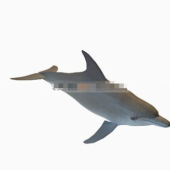 Dolphin Free 3dmax Model