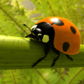 Ladybird Free 3dmax Model