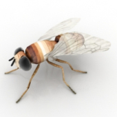 Fly insects Free 3dmax Model