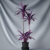 Purple Bonsai Tree Free 3dmax Model