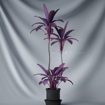 Purple Bonsai Tree