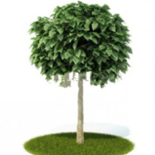 Beautiful Tree Free 3dmax Model