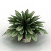 Plant Bonsai Free 3dmax Model