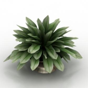 Plant Bonsai