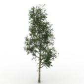 Pine Free 3dmax Model