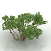 Green Shrub Free 3dmax Model