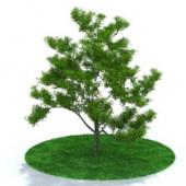 Realistic Tree Free 3dmax Model