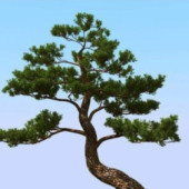 Japanese Pine Trees Free 3dMax Model