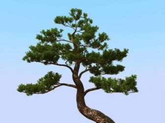 Japanese Pine Trees Free 3dMax Model Free Download No2252Zip