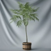 Bonsai Plants Free 3dmax Model