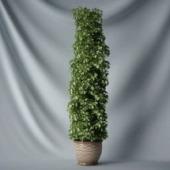 Interior Plant Tree Free 3dmax Model