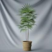 Plant Tree Leaves Free 3dmax Model