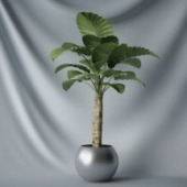 Interior Plant Bonsai Tree Free 3dmax Model