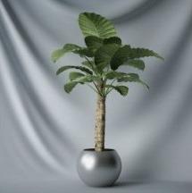 interior plant bonsai tree free 3dmax model bonsai tree interior