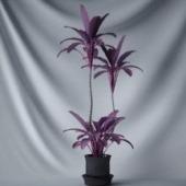 Interior Purple Flowers Free 3dmax Model