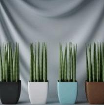 Colorful Interior Plant Bonsai
