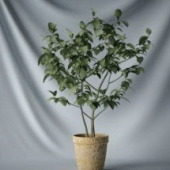 Interior Small Tree Free 3dmax Model