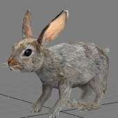 Hare Free 3dmax Model