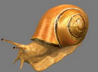 Snail Free 3dmax Model