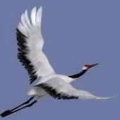 Crane Animal