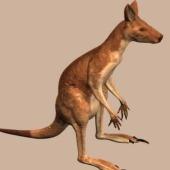 Kangaroo Free 3dmax Model