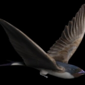 Swallow Bird Free 3dmax Model