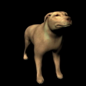 Yellow Dog Free 3dmax Model Animal