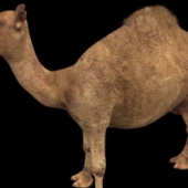 Camel Free 3dmax Model