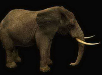 Animals Mammals Elephant Free 3dmax Model