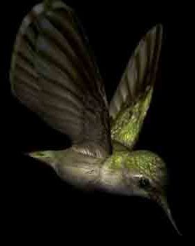 The Smallest Bee Bird Bird Bird Bird Of America's Smallest Bird Eggs Animal Biological