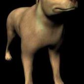 Animals Canine Dog Dogs Expensive Yellow Large Yellow-dog Hybrid Dog Pedigree Dog Dog Free 3dmax Model