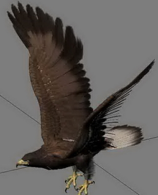 Animal Eagle Bird Hunting Goshawk Attacks On Glider Flight