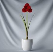 Interior Plant Simple Pot