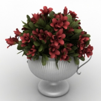 Beautiful Potted Red Flower
