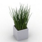 Grass Potted Free 3dmax Model Plant Free 3dmax Model