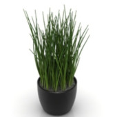 Indoor Potted Free 3dmax Model Grass