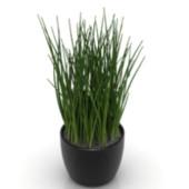 Indoor Potted Grass