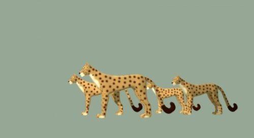 Africa Leopard