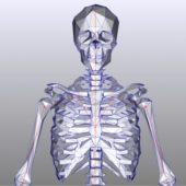 Mrbones, Skeleton, Lowpoly