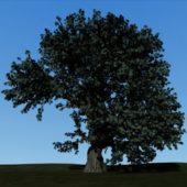 Tree And Ground Textured