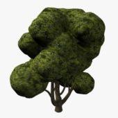 Oak Tree V1