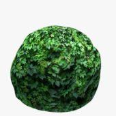 Round Box Hedge V1