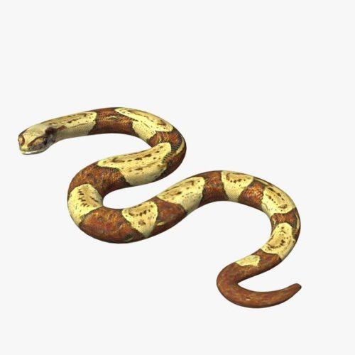 Boaconstrictor Snake