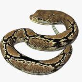 Rattlesnake V04