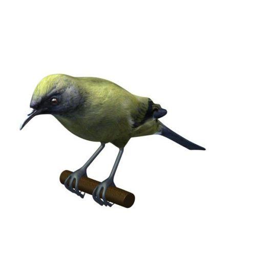 Bird Sparrow