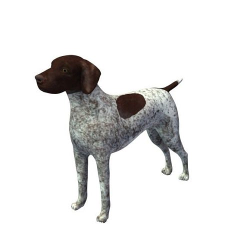 German Shorthaired Dog
