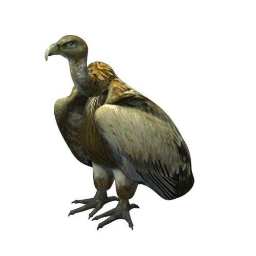 Golden Vulture Bird